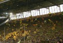 German Super Cup: Bayern Munich vs Borussia Dortmund